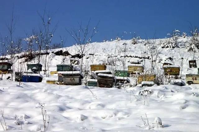 Beekeeping-in-Winter
