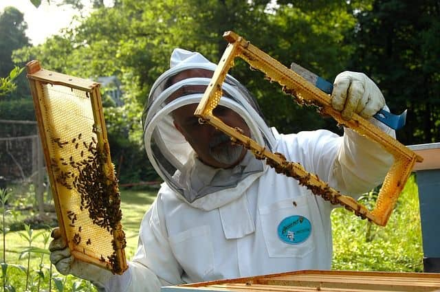 Best Beehives for Sale