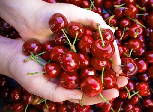ITQ provee alta disponibilidad a la principal exportadora de cerezas de Chile