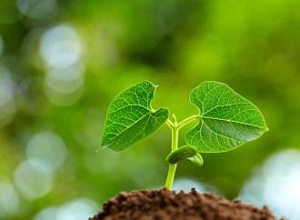 Atos presenta soluciones de descarbonización
