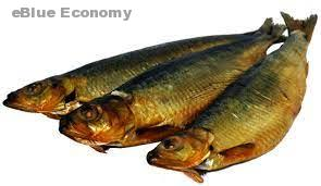 eBlue_economy_ سمك مدخن