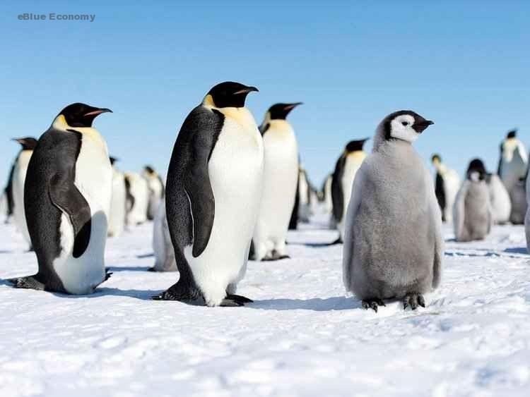 eBlue_economy_ هل تعرف لغة البطريق