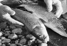 eBlue_economy_ تعرف على اكثر الاسماك فائدة فى العالم سر اهتمام روسيا !
