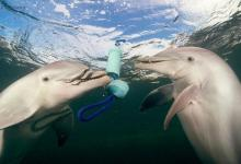 eBlue_economy_تعرف على كيفية حل شيفرة اصوات الدلافين
