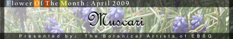 Online Art Exhibit:  Flower of the Month: Muscari