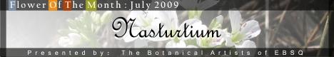 Online Art Exhibit:Flower of the Month: Nasturtium