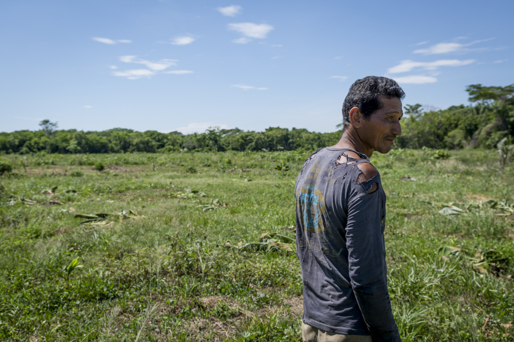 A farmer looks over the 50 plantain trees and 200 cassava plants destroyed by Aportes San Isidro guards.