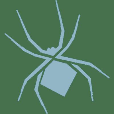 spider-demo