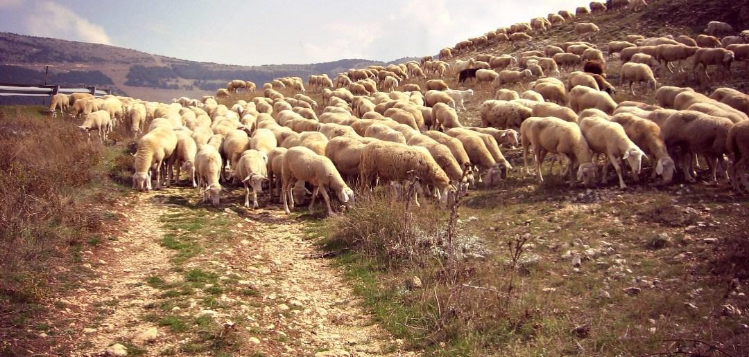 I tratturi e la transumanza in Abruzzo