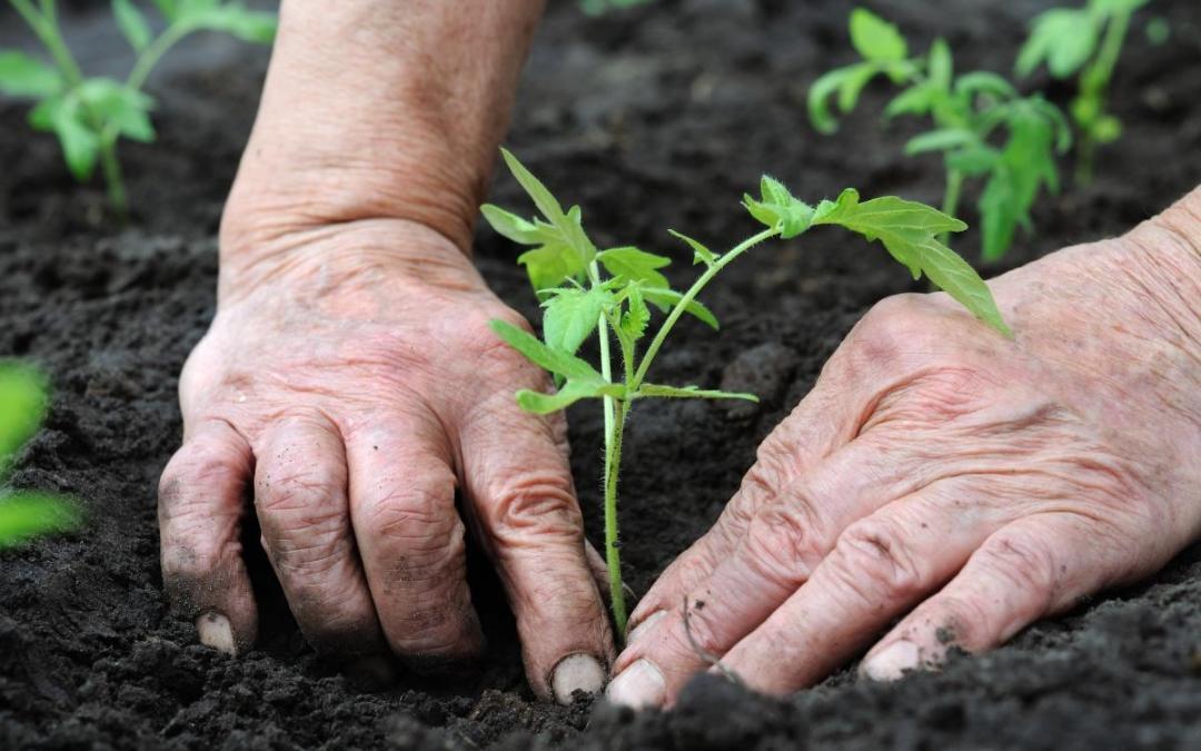 Slow Food, l'amore per la genuinità