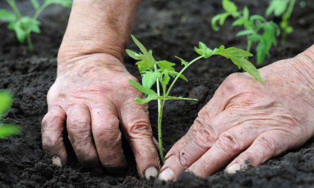 Slow Food Abruzzo, l'amore per la genuinità