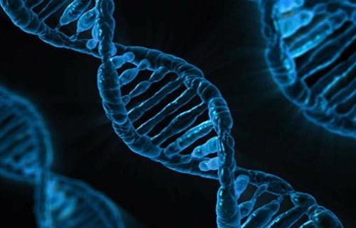 ETUDIEZ TOUTES LES INITIATIONS LIÉES À L'ADN