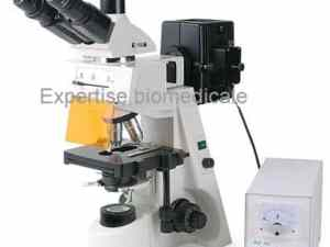 Microscope a fluorescence XYL-146
