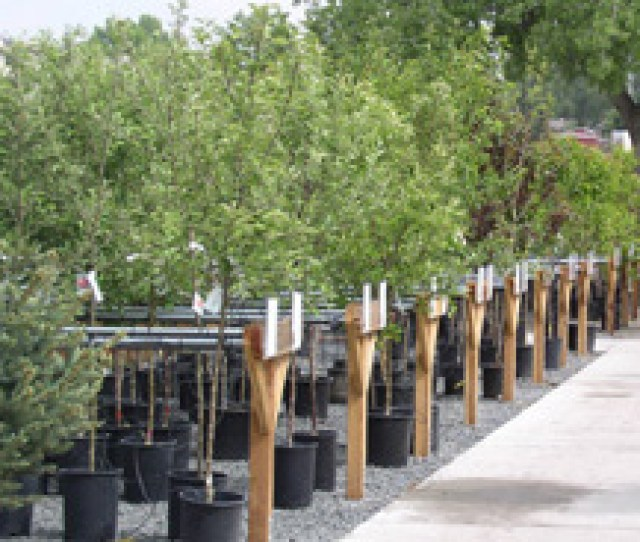 Your Complete Nursery Garden Center And Patio Store Open Year Round Shop In The Comfort Of Our Huge Greenhouses Filled With Dazzling Flowers