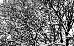 SnowOnBranchesBW