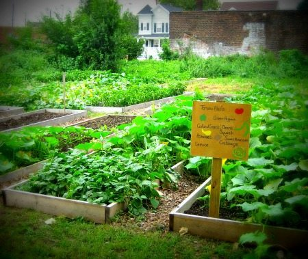 Community Garden to provide food for the hungry