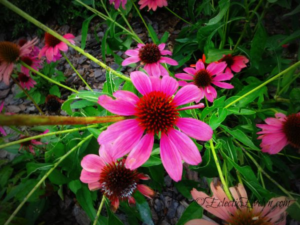 Flower Power #WordlessWednesday EclecticEvelyn.com