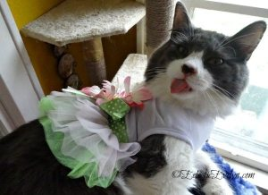 Little Edie's Thoughts on Wearing a Dress #WordlessWednesday EclecticEvelyn.com
