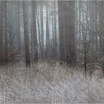 Frozen wood, Frozen grasses, New Forest, The New Forest, Frosted trees, Landscape photography