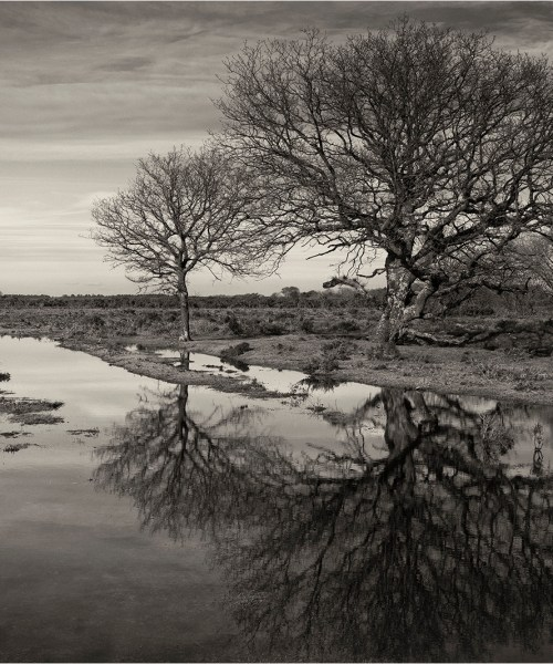 Trees, puddles, reflections, New Forest