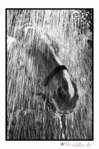 raindanceweb