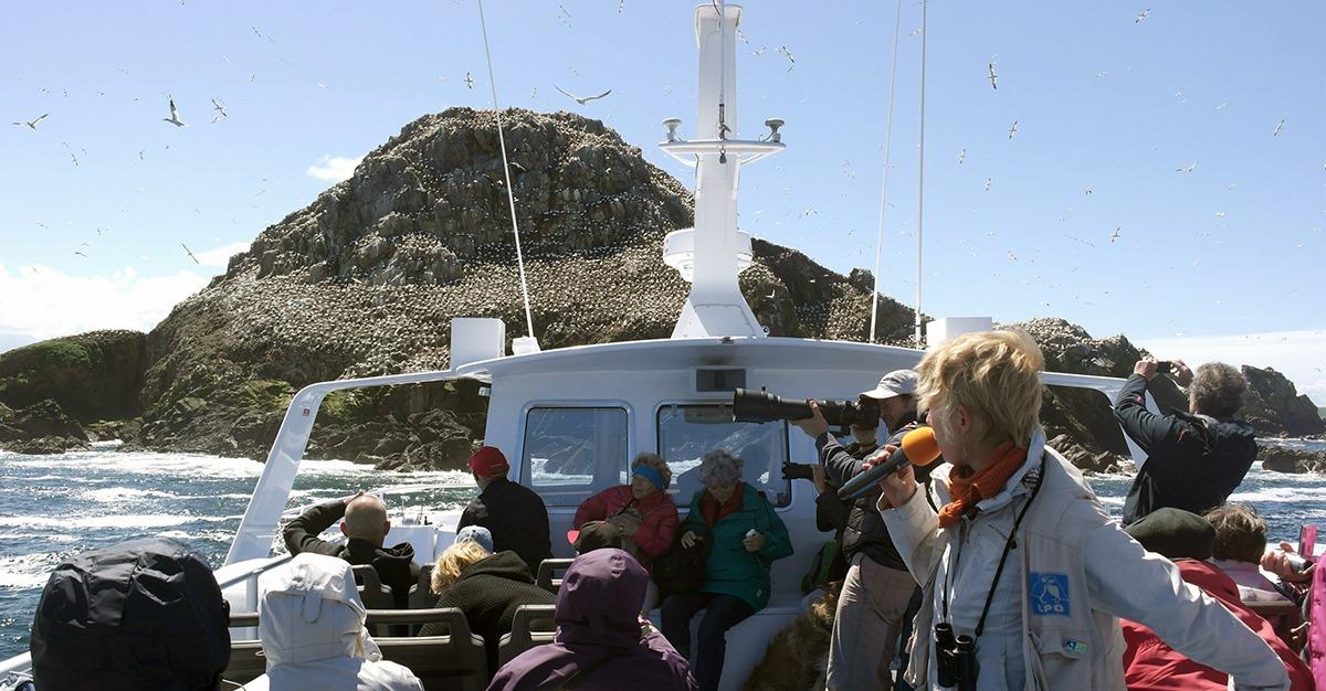 Ile Grande (22), Sortie en mer : les Sept-Îles, un spectacle fou !