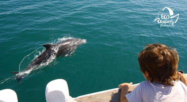 Young bottlenose