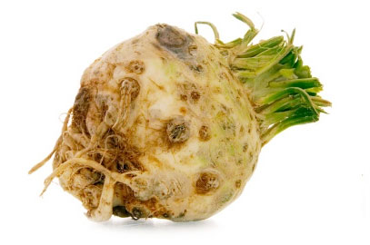 one whole organic celeriac on white background