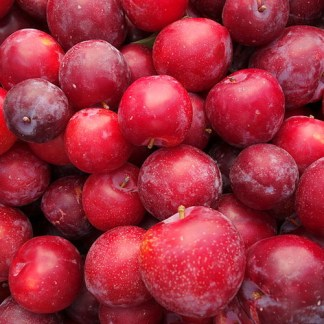 layers of organic red plums