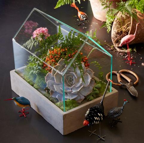 terrario caja