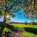 ¿Cómo contribuye la agricultura ecológica u orgánica a proteger el medioambiente?