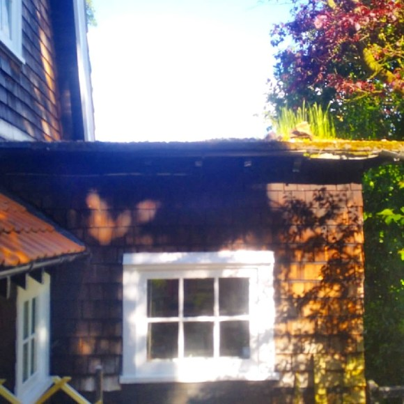 Side view of green roof on wooden extension