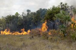 250x166-images-noticias_ambientais-janeiro2013-incendio-florestal-roraima-ibama-foto-celso_ambrosio
