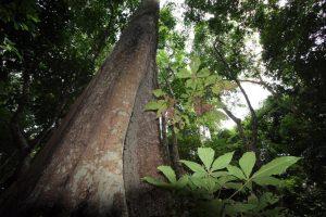 Floresta Amazônica: novas diretrizes - Arquivo MMA