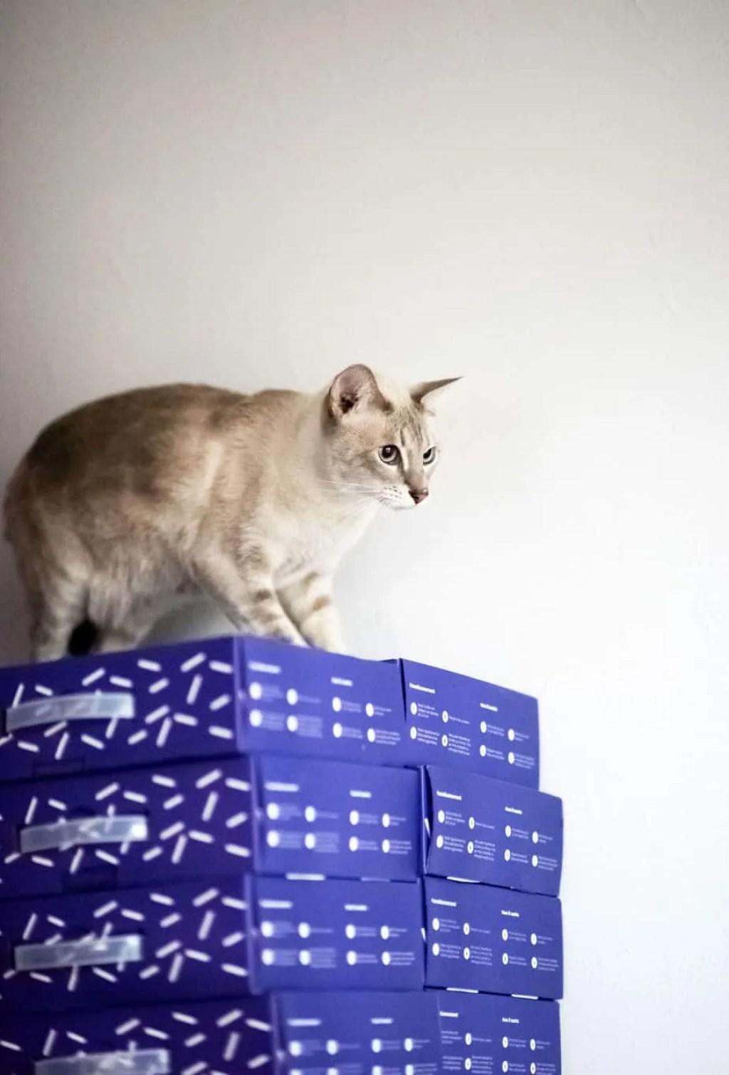 Ecocat meilleure litière