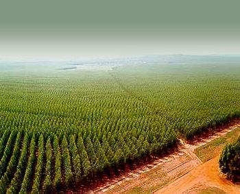 https://i2.wp.com/www.ecoclimatico.com/wp-content/uploads/2008/11/monocultivo.jpg