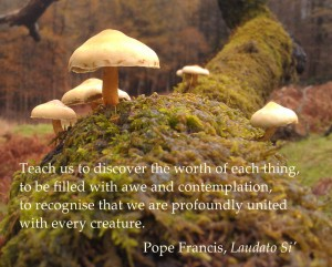 LaudatoSi-mushrooms-small
