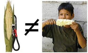 biocombustivel não é alimento