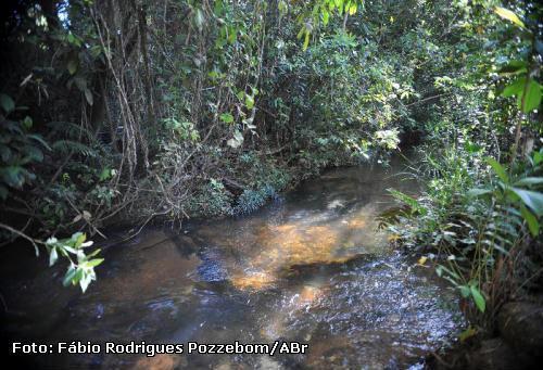 Enriquecer cobertura florestal pode manter qualidade da água