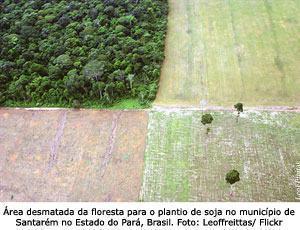 desmatamento no Pará para plantio de soja