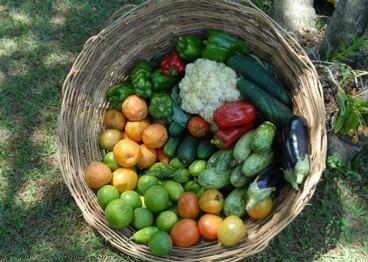 Dieta saudável e responsável pode ajudar o meio ambiente