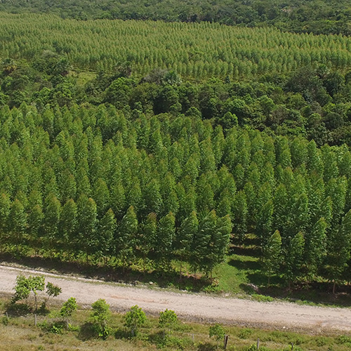 Reforestación y aprovechamiento forestal