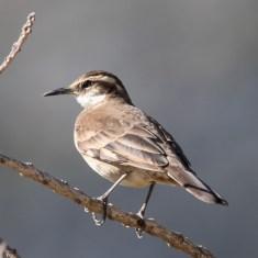 Fauna Mineira: Serra do Cipó