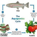 aquaponic gardening diagram