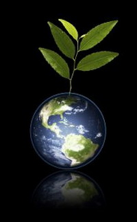 how to plant a tree to save earth