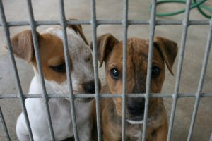 random acts of kindness animal rescue shelters