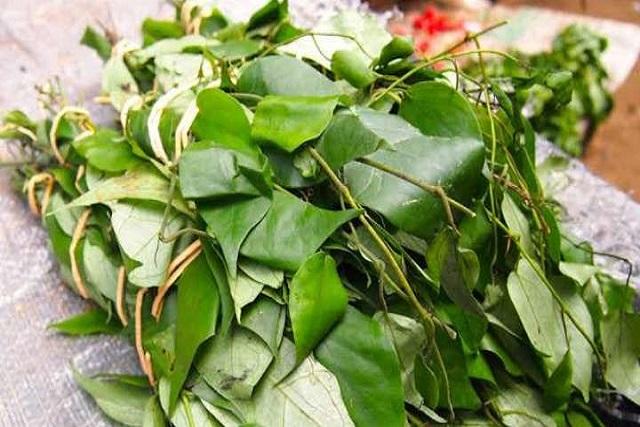 Uziza Leaf And its Health Benefit