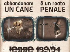 Risultati immagini per abbandono animali