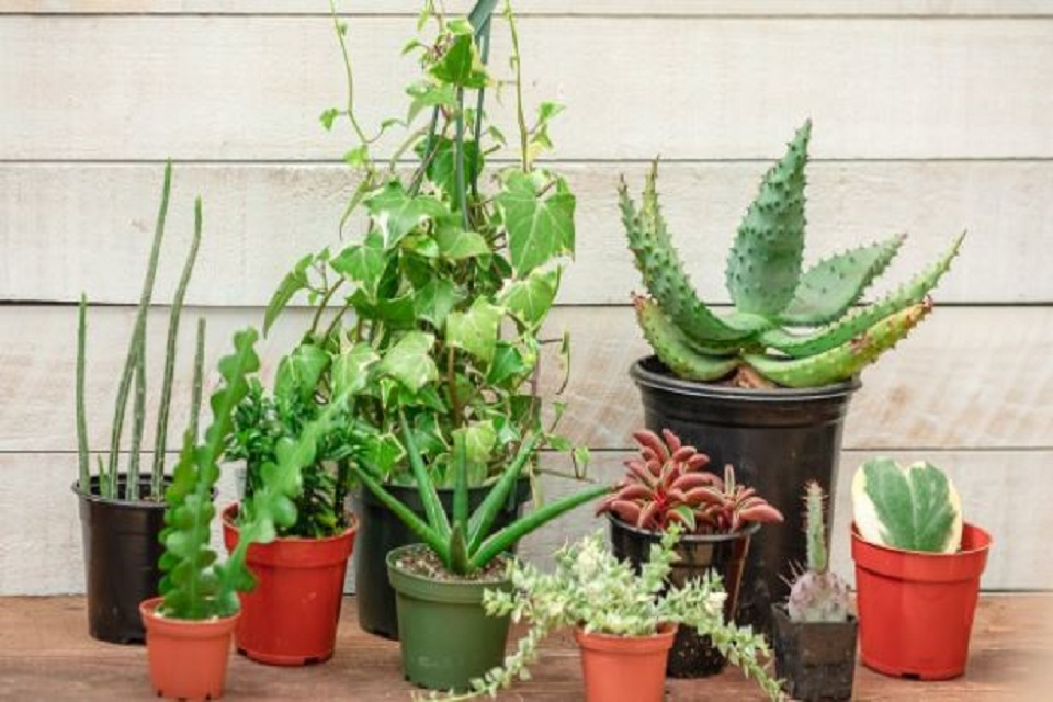 Demanding Houseplants