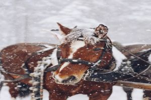 horse safe in winter